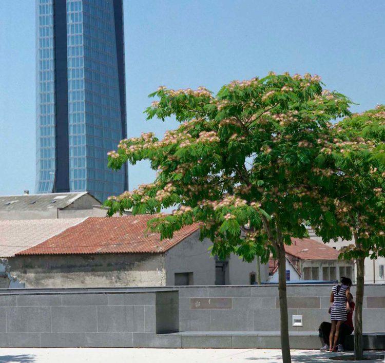 Marseille, jardin Mirès, série Aller aux Jardins 2010-11, réalisée dans le cadre du programme Images Contemporaines/Patrimoine du CG13
