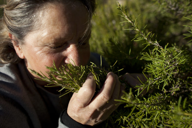 Hélène David | L'esprit des calanques | 2008-2011 | Jeanine Blanc, à la cueillette dans les collines de la calanque de Morgiou. Marseille, 9ème arrondissement. 28/09/2010.