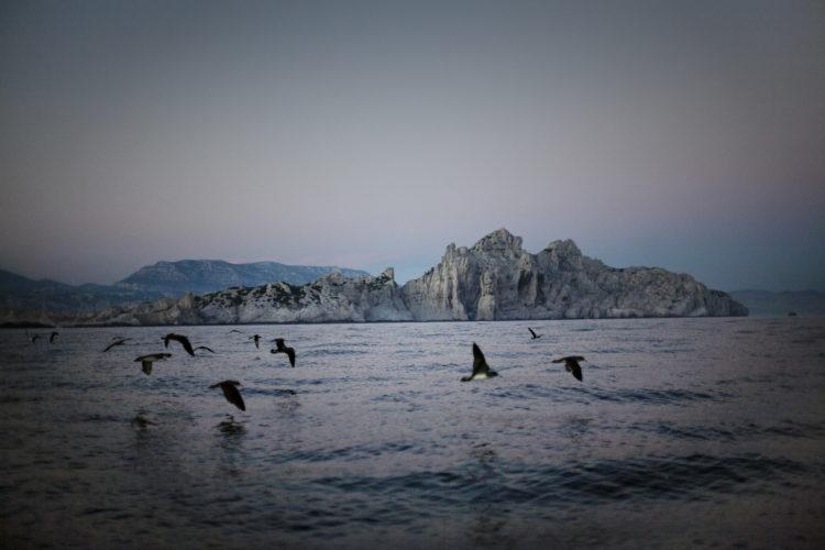 Hélène David | L'esprit des calanques | 2008-2011 | Le conservatoire du littoral a confié la gestion de l'archipel de Riou au CEN PACA. L'équipe du conservateur, Alain Mante, veille sur la population de puffins, oiseaux migrateurs protégés. MARSEILLE.