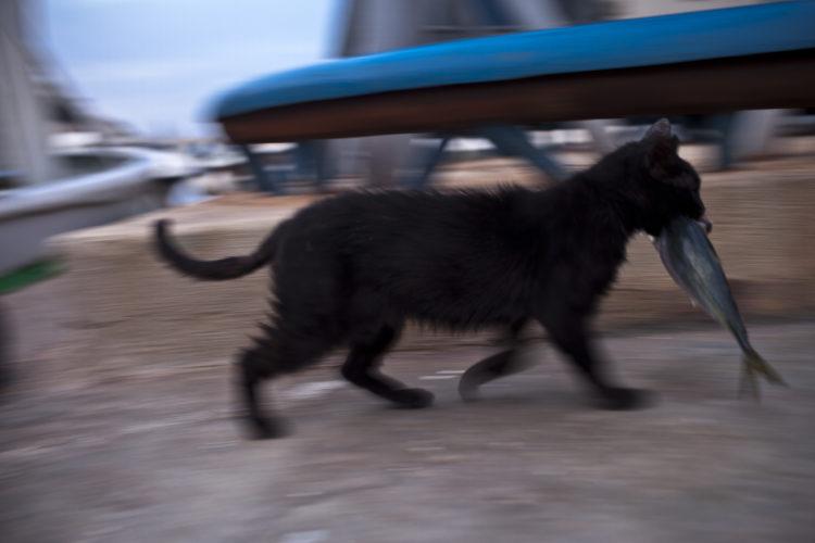 Hélène David | L'esprit des calanques | 2008-2011 | Calanque de Morgiou. Comme dans beaucoup de ports méditérranéens, les chats des rues vivent des déchets de la pêche. Marseille 9ème arrondissement. 28/05/2010
