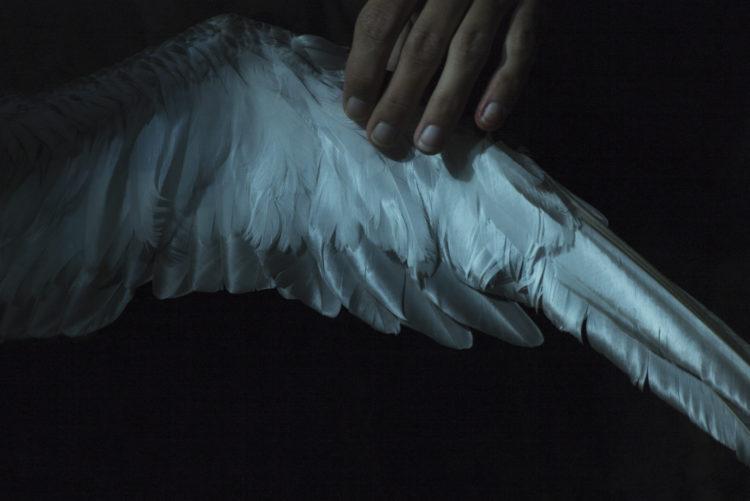 Hélène David | Noces ou les confins sauvages | 2012-2017 | Tirage pigmentaire sur papier Awagami Kozo  White 110g/m2. 50x75. Tirage réalisé par Cyril Barbotin, laboratoire Aza, Marseille. FCAC.le baguage du Puffin cendré.