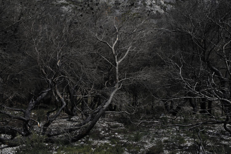 Hélène David | Noces ou les confins sauvages | 2012-2017 | Après l'incendie. Calanque de Marseilleveyre