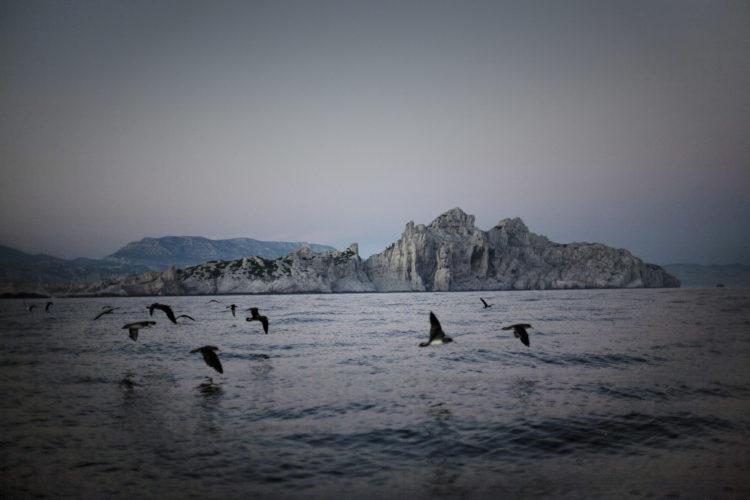 Hélène David | Noces ou les confins sauvages | 2012-2017 | A Riou, au large du massif des calanques, les puffins Yelkouans se rassemblent en
