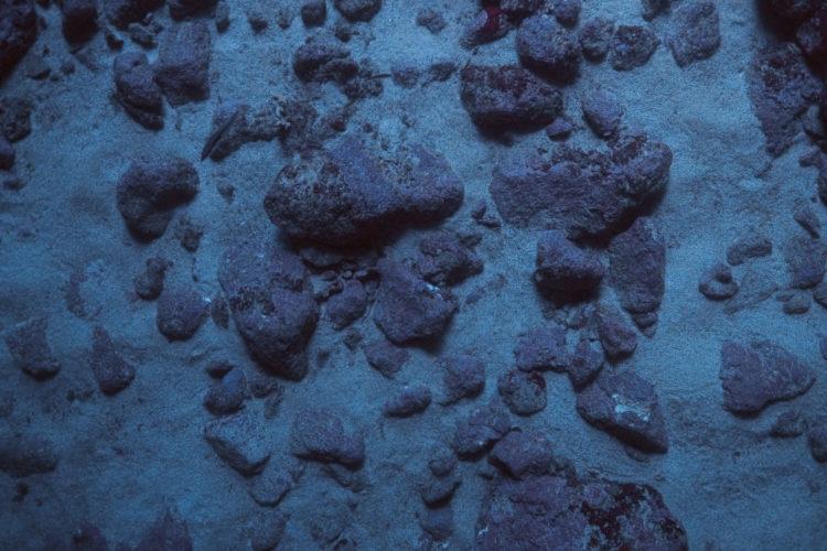Hélène David | Noces ou les confins sauvages | 2012-2017 | Fond marin, grotte bleue de la calanque de Morgiou
