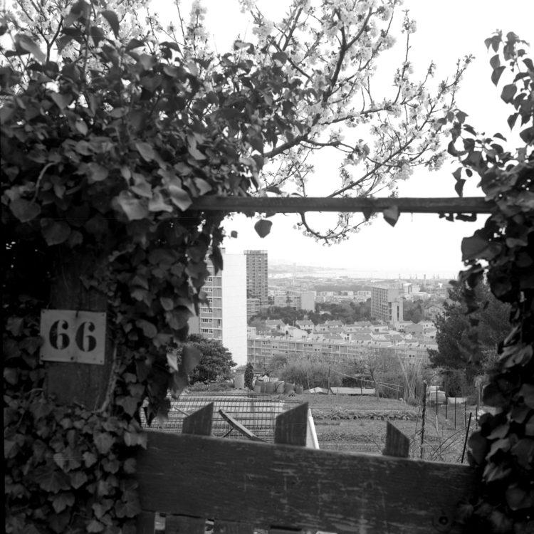Anne Loubet   Les jardins ouvriers   1998-1999   LE JARDIN DU CASTELLAS AUX  AYGALADES, MARSEILLE 15E. VUE PANORAMIQUE, DU PLUS VASTE JARDIN FAMILIAL DE MARSEILLE AVEC 234 PARCELLES