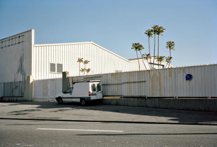Quartiers Nord, Saint-André. Quelques ailantes (Ailanthus altissima) poussent dans l'enceinte d'un entrepôt, chemin du Littoral, au niveau de la gare de Mourepiane.