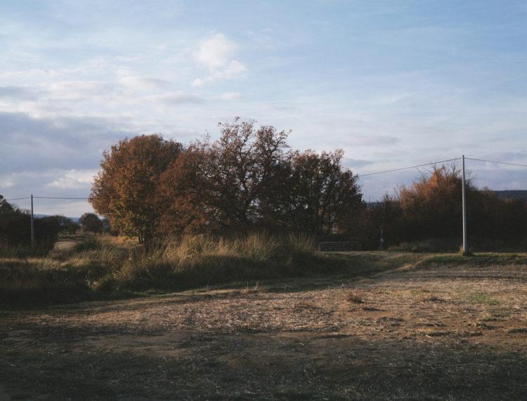 Julien Marchand | From the wasteland | 2015-2019 | arbres piégés, autour de la D35.