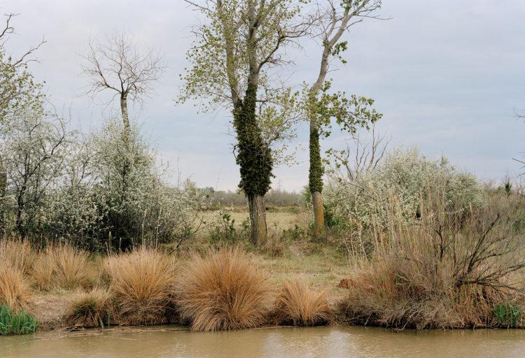 Thibaut Cuisset | Le pays clair, Camargue | 2011-2012 | Environs de Sambuc, Arles, 2012