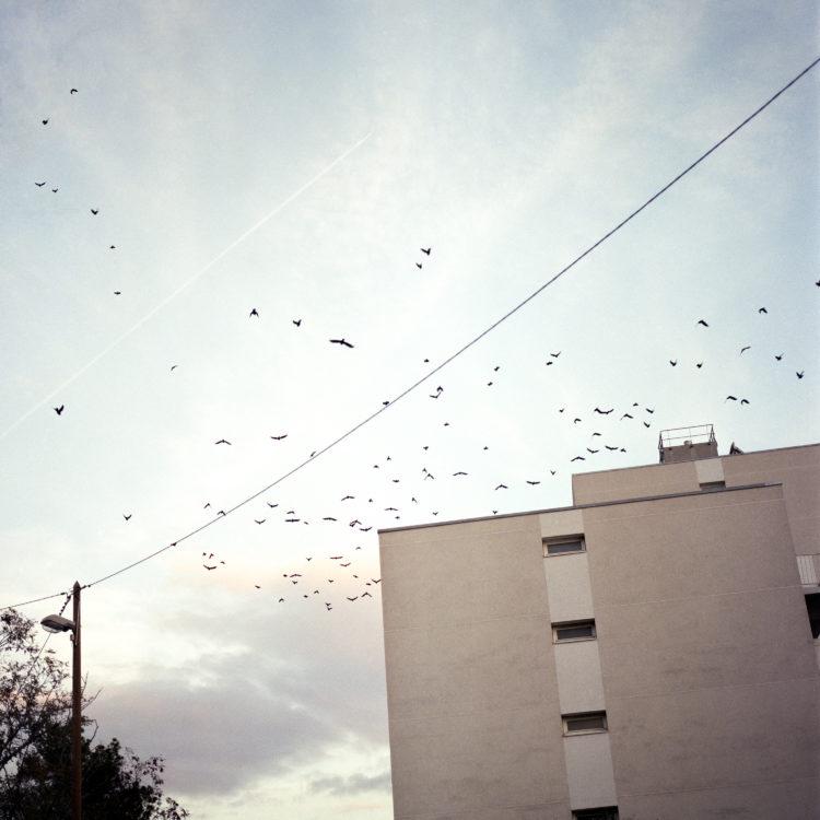 Élise Llinares | Littoral Marseille | 2017-2018 | HLM sur le chemin du Littoral et le long de l'autoroute, quatrtier nord