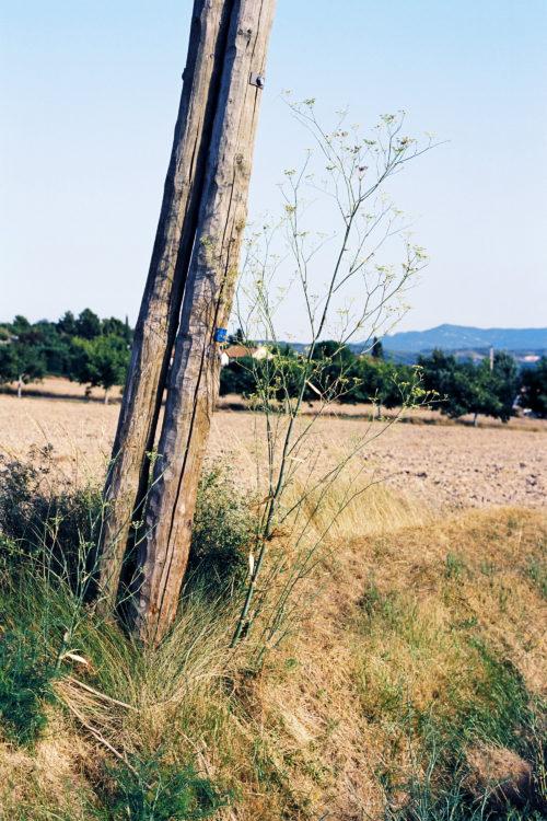 Sylvain Maestraggi | Autour d'Aix-en-Provence | 2012-2020 | Chemin du Pont-Rout, été 2012