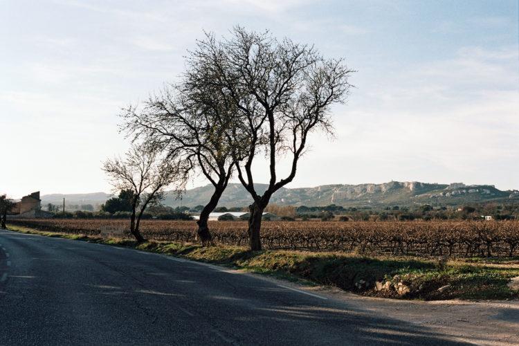 Chaîne de la Fare et vignoble, Lançon-de-Provence, 2013
