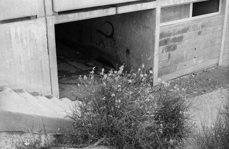 Fabrice Ney | ZUP n°1 | 1980-1983 | Extrait de ZUP n°1 - Marseille  - 1981-1983. Escalier de descente vers la partie basse longeant la façade arrière de l'immeuble B, végétation et passage de rez- de-chaussée sous l'immeuble.