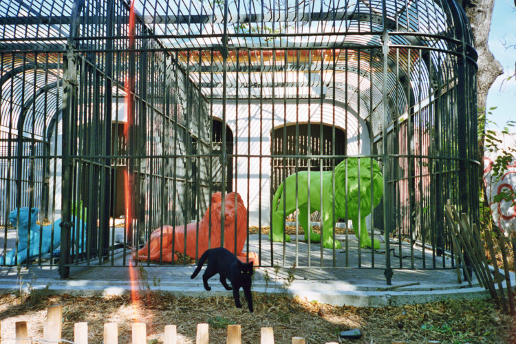 Sam Phelps   Belladone   2017-2020   Cats in previous zoo cages at Parc Longchamp in Marseille, France, 2017.