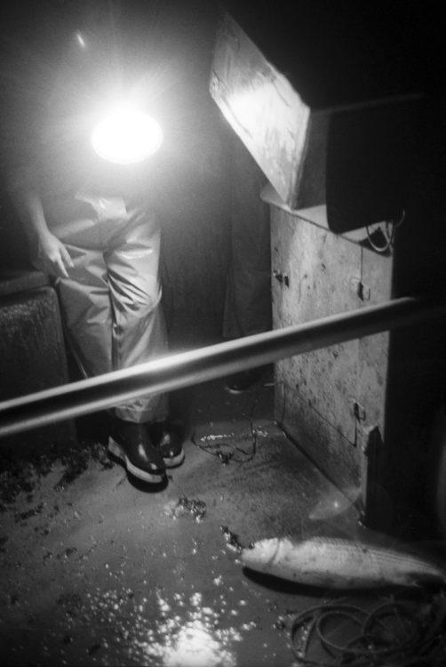 Franck Pourcel | La petite mer des oubliés – Gestes du travail | 1996-2006 | Gestes du travail | Photographie en N/B d'un pêcheur tenant une lumière sur un poisson à l'intérieur d'un bateau dans la nuit
