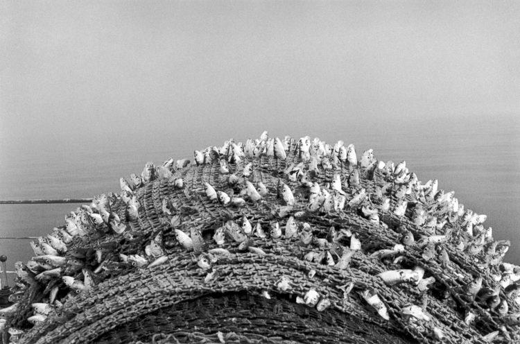 Photographie en N/B d'un filet de pêche avec des têtes de poisson qui sortent