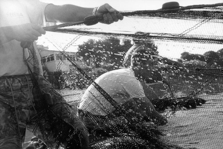 Franck Pourcel | La petite mer des oubliés – Gestes du travail | 1996-2006 | Gestes du travail | Photographie en N/B d'un groupe de pêcheurs qui tire les filets depuis la plage