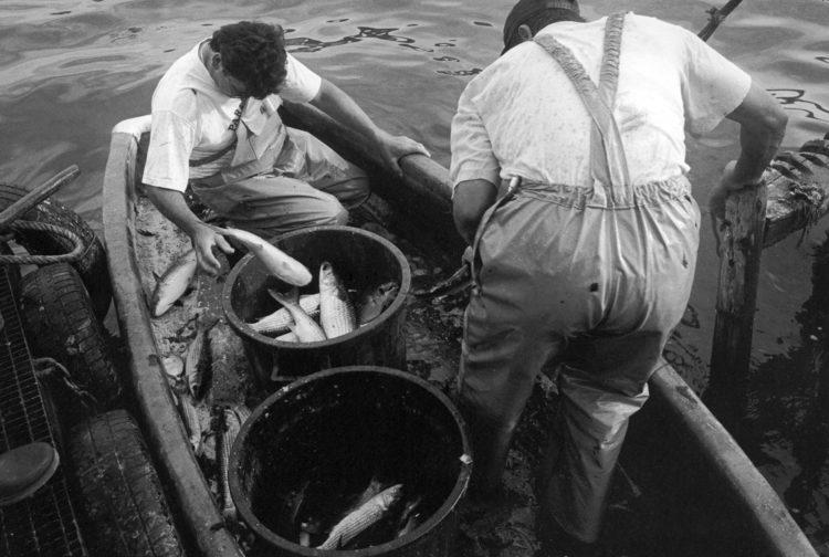 Franck Pourcel | La petite mer des oubliés – Gestes du travail | 1996-2006 | Gestes du travail | Photographie en N/B de deux pêcheurs prélevant les poissons dans les filets