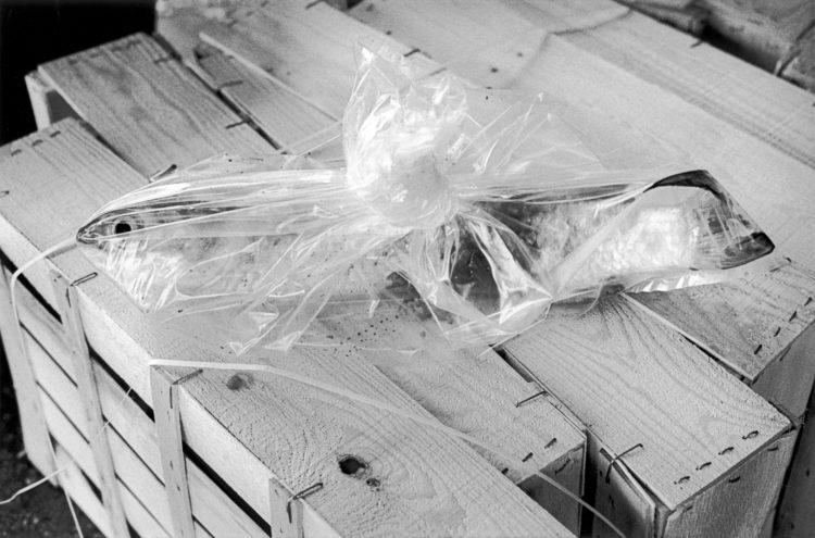 Franck Pourcel | La petite mer des oubliés – Gestes du travail | 1996-2006 | Gestes du travail | Photographie en N/B d'un poisson dans un sac en plastique