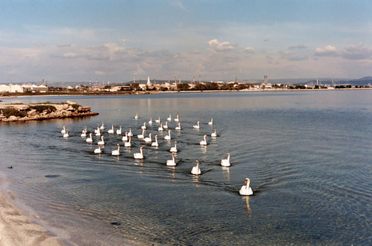 Franck Pourcel | La petite mer des oubliés – Paradoxes | 1996-2006 | Paradoxes | Photographie en couleur d'un groupe de cygnes devant la ville de Berre et l'usine pétrochimique
