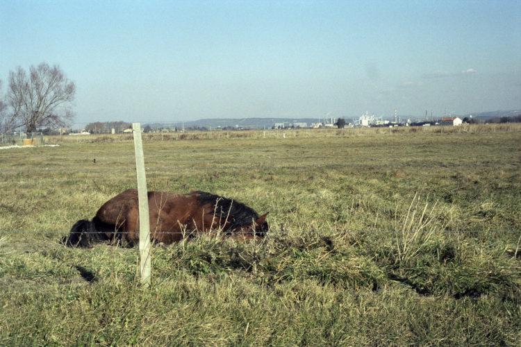 Franck Pourcel | La petite mer des oubliés – Paradoxes | 1996-2006 | Paradoxes | Photographie en couleur d'un cheval allongé dans un champ, au loin l'usine pérochimique